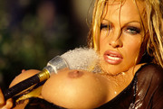 Pamela Anderson Sexy Picture Collection